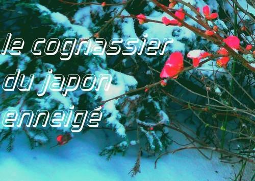 cognassier-1.jpg
